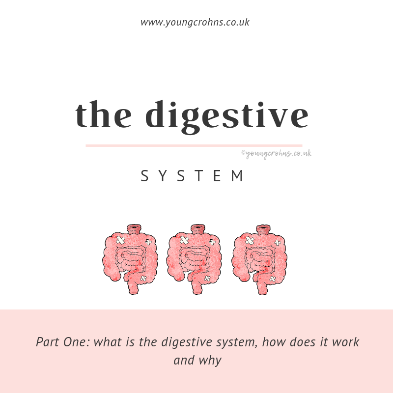 The Digestive System: Part I